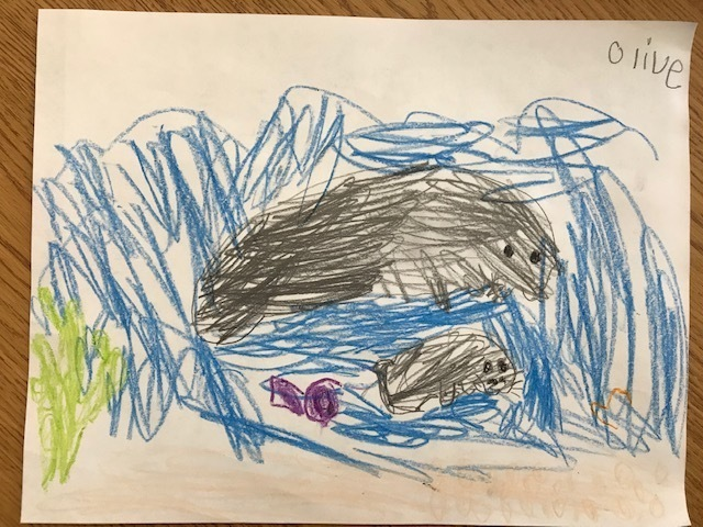 Manatees in First Grade